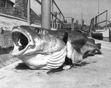 10defisk