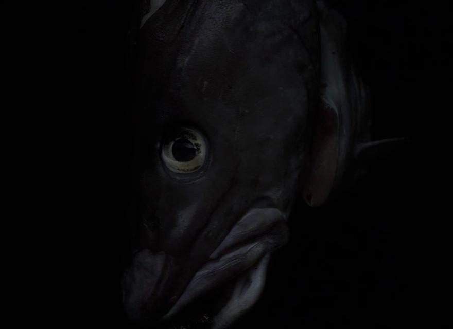 o-tiid-o-fisk-1
